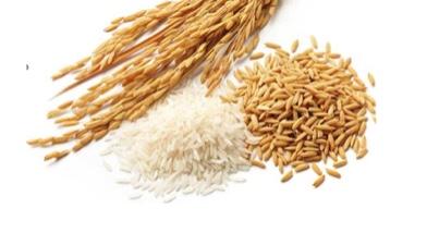 Riz import export Rice Jisser